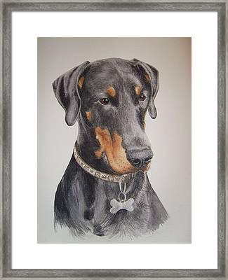 Dobermann Framed Print by Keran Sunaski Gilmore