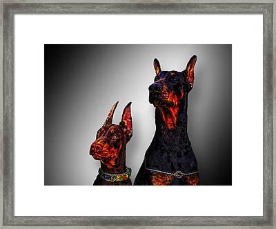 Dobermans Framed Print