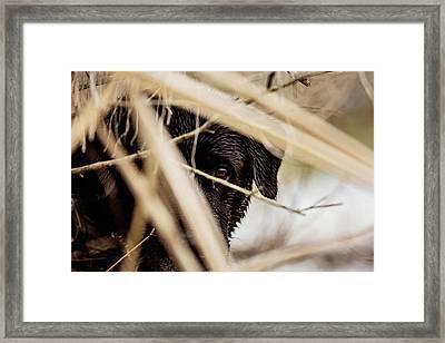Doc Framed Print by Scott Pellegrin