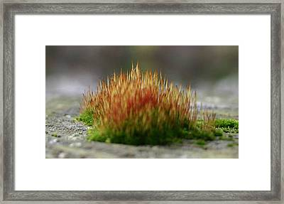 Framed Print featuring the photograph Dock Moss by Jack G  Brauer