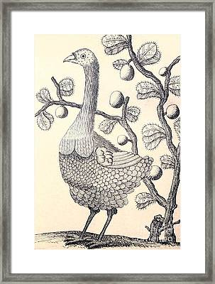 Dodo Bird Rodriguez Solitaire, Extinct Framed Print by Biodiversity Heritage Library