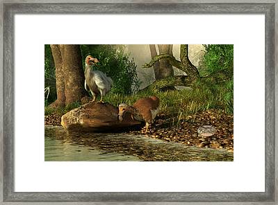 Dodos On The Riviere Tamarin Framed Print