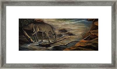 Doe Creek Framed Print