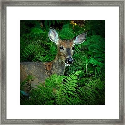 Doe In The Woods Framed Print