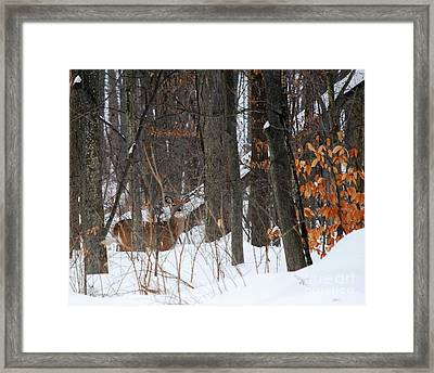 Framed Print featuring the photograph Doe In Woods by Lila Fisher-Wenzel