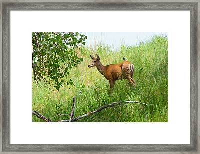 Doe Meets Bird 1 Framed Print