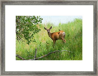 Doe Meets Bird 2 Framed Print