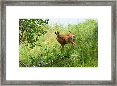 Doe Meets Bird 3 Framed Print