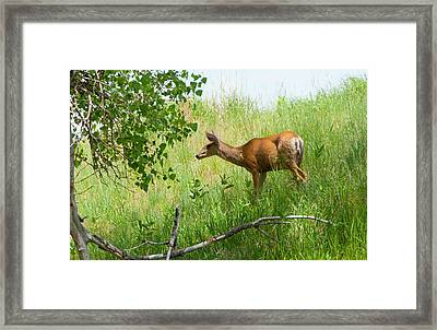Doe Meets Bird 5 Framed Print