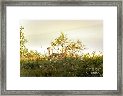 Doe On Sunlit Hill Framed Print