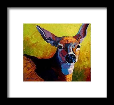 Buck Deer Framed Prints