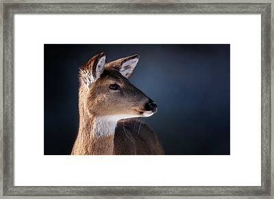 Doe Portrait - White Tailed Deer Framed Print by SharaLee Art