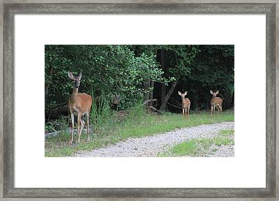 Doe With Twins Framed Print