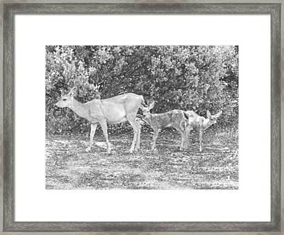 Doe With Twins Pencil Rendering Framed Print