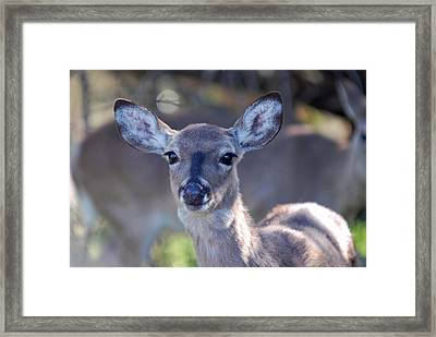 Framed Print featuring the photograph Doefaced by Teresa Blanton