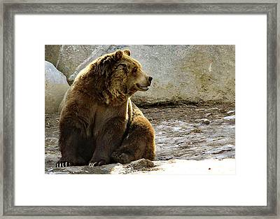 Does Anyone Do Claws Framed Print
