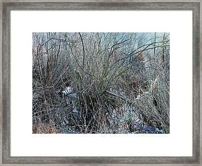 Does Nature Expressionistically Abstract Itself Framed Print by Terrance DePietro