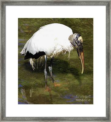 Does The Water Make My Feet Look Big Framed Print by D Hackett