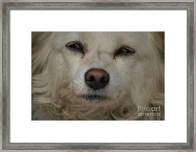 Dog 1 Framed Print by Padamvir Singh