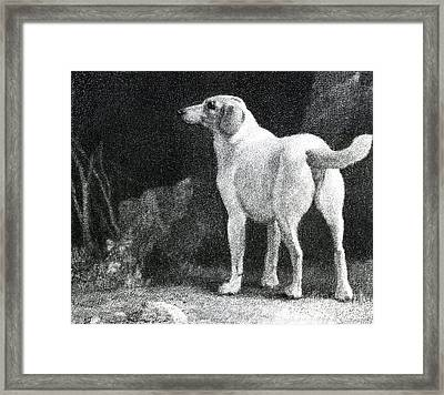 Dog, 1788 Framed Print by George Stubbs