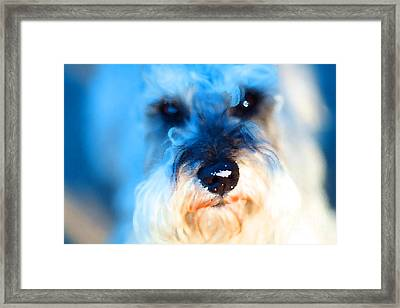 Dog 2 . Photo Artwork Framed Print by Wingsdomain Art and Photography