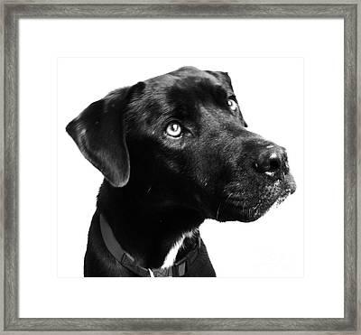 Dog Framed Print by Amanda Barcon