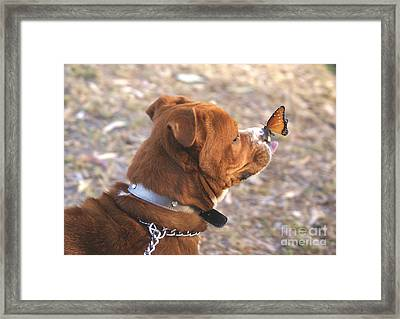Dog And Butterfly Framed Print