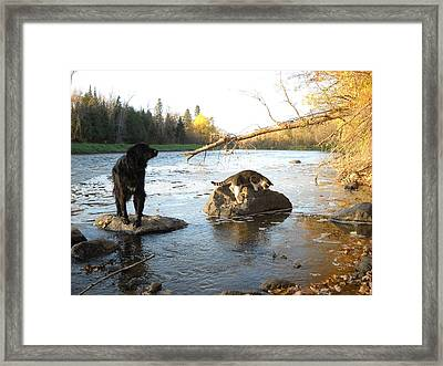 Dog And Cat Exploring Rocks Framed Print