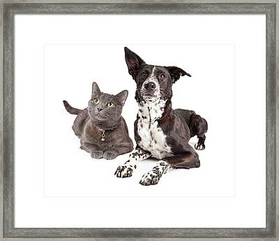 Dog And Cat Laying Looking Up Framed Print by Susan Schmitz
