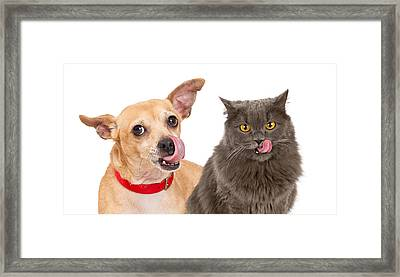 Dog And Cat Licking Lips Framed Print by Susan Schmitz