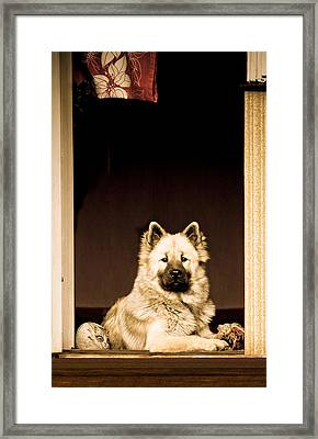 Dog And Cat Framed Print by Maggie Terlecki