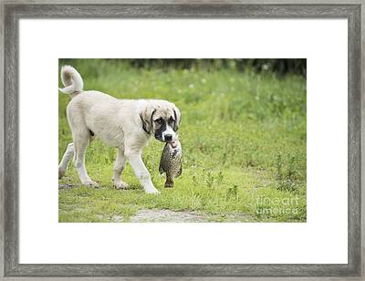 Dog Gone Fishing Framed Print by Juli Scalzi
