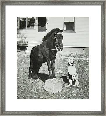 Dog And Pony Show Framed Print by Krista Barth