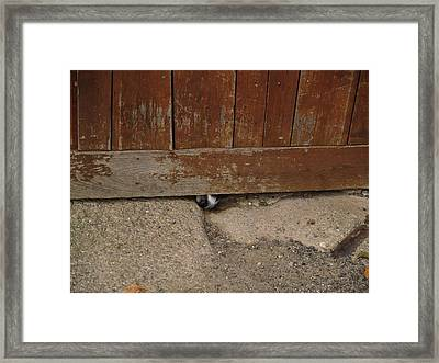 Dog At The Door Framed Print by Aline Kala