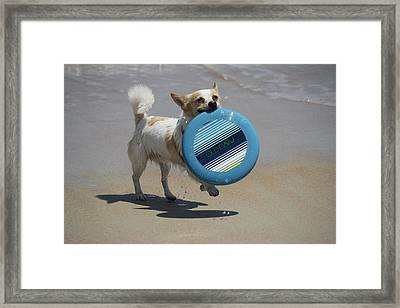 Dog Beach Bliss Framed Print by Mandy Shupp