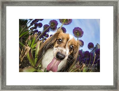 Dog Breath Framed Print by Leslie Leda