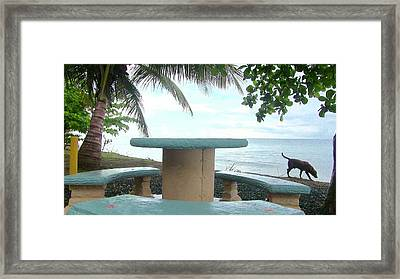 Dog By The Beach In Rincon Framed Print