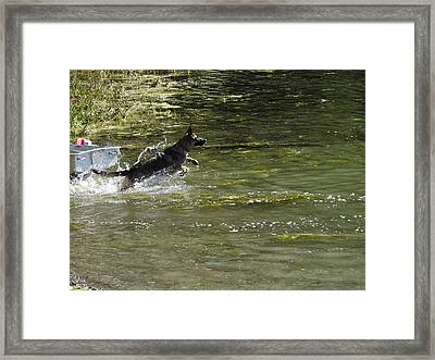 Dog Chasing His Stick Framed Print