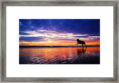 Dog Chasing Stick At Sunrise Framed Print