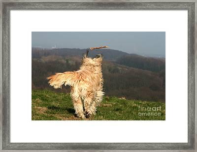 Dog Chasing Stick Framed Print