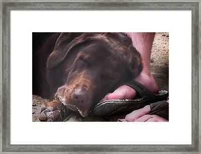 Dog Day Afternoon Framed Print by Karen Wiles