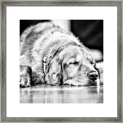 Dog Days Of Summer #tucker #louisiana Framed Print