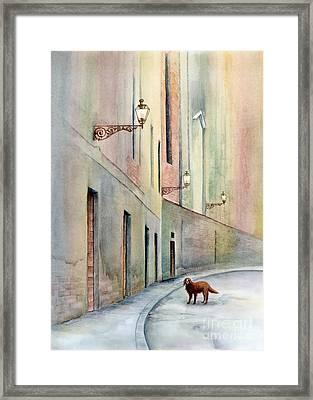 Dog Days Of Vicenza Framed Print by Amy Kirkpatrick