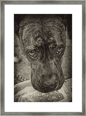 Dog Days Framed Print by Off The Beaten Path Photography - Andrew Alexander