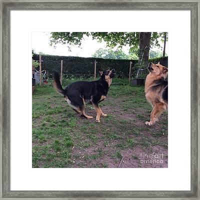 #dog #dogs #dogsrule #dogart #instadog Framed Print