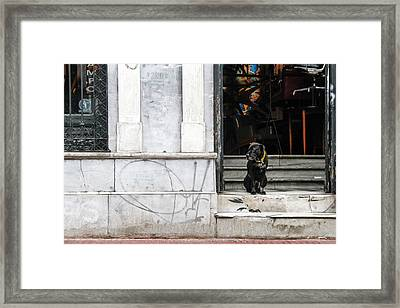 Dog From The Block Framed Print