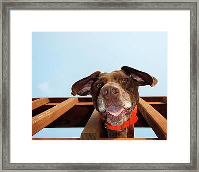 Dog Gone Crazy Framed Print by Brook Burling