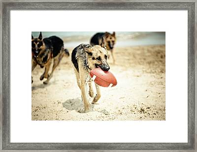 Dog Holding Ball In Mouth Framed Print by R. Brandon Harris