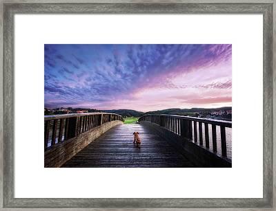 Dog In A Bridge Framed Print by Mikel Martinez de Osaba