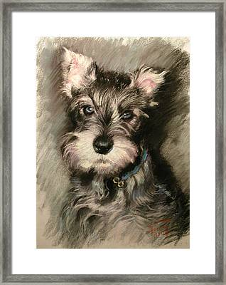 Dog In Blue Collar Framed Print